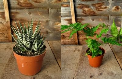 2plants small