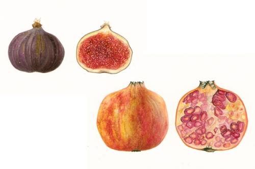 fig & pom