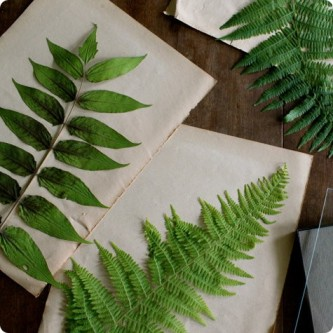 made-with-love-pressed-botanical-specimens