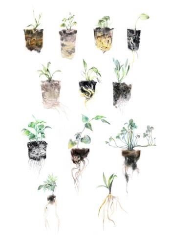 WEB_plant