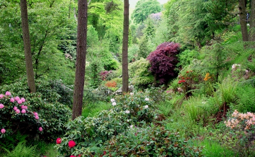 dunge_valley_rhododendrons_600x