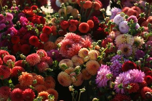 floret flowers01